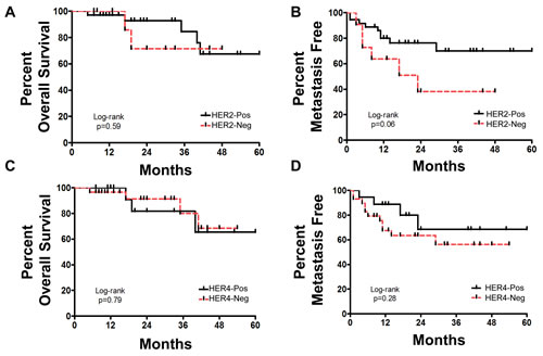 Neoadjuvant cohort response to trastuzumab as determined by HER2 or HER4 expression status.