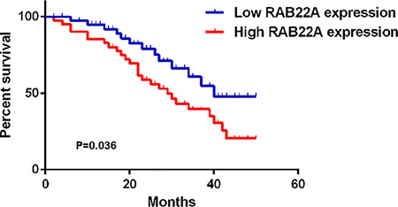 The overall survival curves for melanoma patients with high expression (+++ and ++) and low expression (+ and −) of RAB22A.