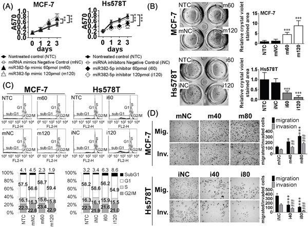 The biological effects of miR-382-5p were evaluated in MCF-7 cells (lower endogenous miR-382-5p) and Hs578T cells (higher endogenous miR-382-5p).