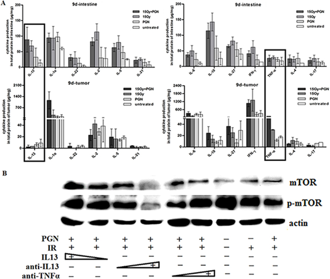 IL13 played a significant role in PGN's differential effect on irradiated intestine and tumor.