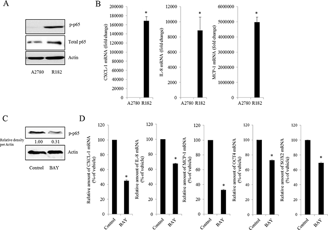 Effect of NF-κB activation on human ovarian cancer chemokines.