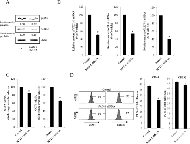 Involvement of NAG-1 expression in NF-κB-mediated inflammatory responses and stemness in R182 cells.