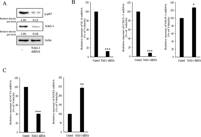 Involvement of NAG-1 expression in NF-κB-medicated inflammatory responses and stemness in SKOV3 cells.