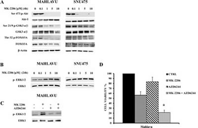 Effects of MK-2206 on the phosphorylation levels of key Akt substrates and ERK 1/2.