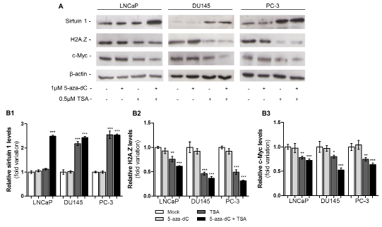 Epigenetic modulating drugs have the capacity to upregulate protein levels of sirtuin 1 and decrease levels of H2A.Z and c-Myc.