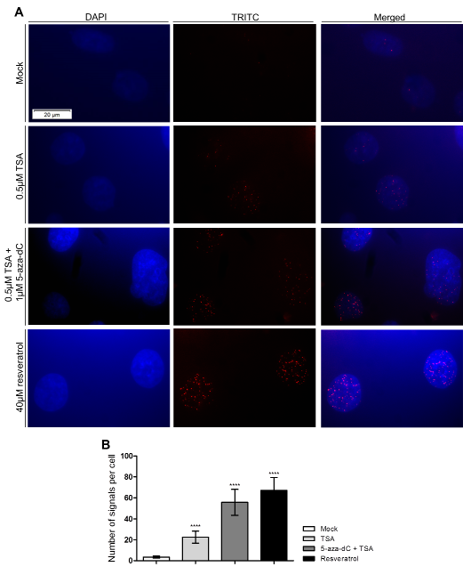 PCa cells exposure to epigenetic modulating drugs and resveratrol promotes the physical and direct interaction between sirtuin 1 and H2A.Z.
