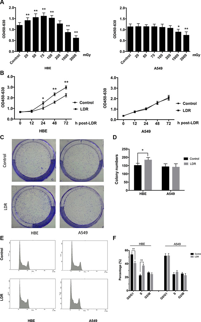 LDR stimulates cell proliferation and cell cycle progression of HBE cells but not A549 cells.