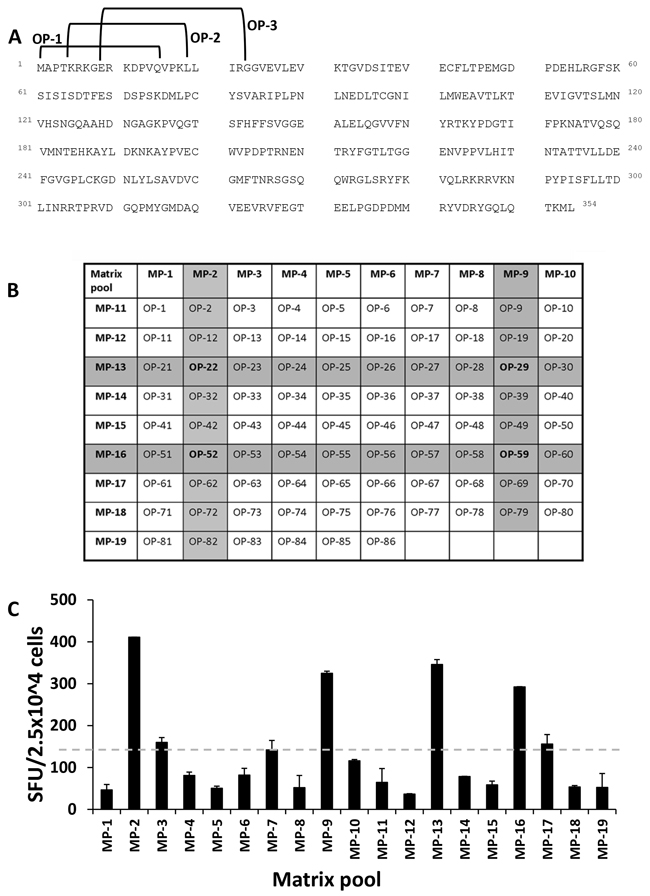 Strategy for the identification of naturally processed pentadecamer peptides.