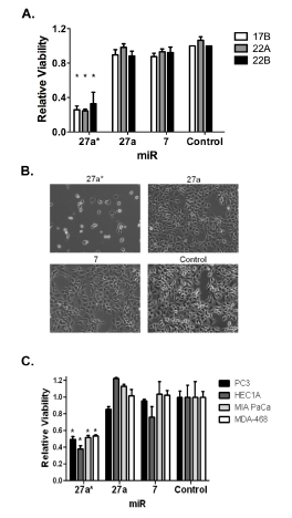 miR-27a* transfection decreases cell viability in HNSCC cells and other solid tumor types.