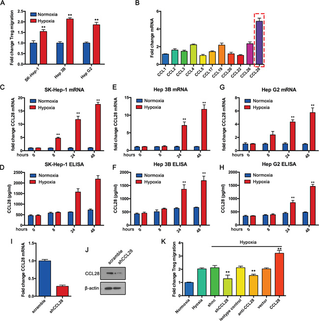 Hypoxic hepatocellular carcinoma cells recruit Tregs by upregulating CCL28 in vitro.