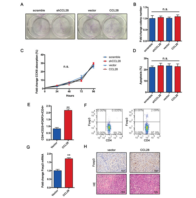 CCL28 recruits Tregs in vivo.