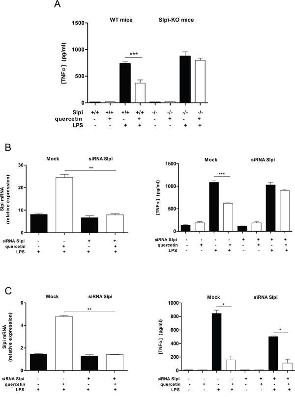 Quercetin reduces TNFα secretion by up-regulating Slpi.