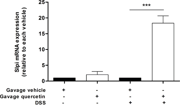 Orally administered quercetin induces Slpi expression in murine colon.