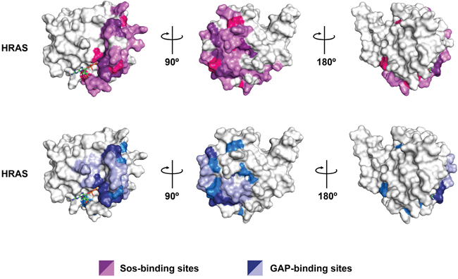 Spatial distribution of all DIRP in HRAS protein.