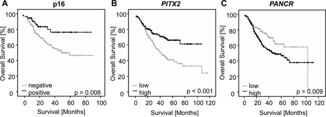 Kaplan-Meier analysis of overall survival in HNSCC patients.
