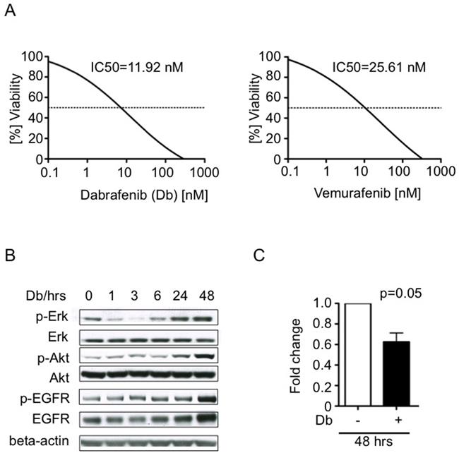 Tumor cell response to BRAFV600E inhibitors dabrafenib and vemurafenib in vitro.