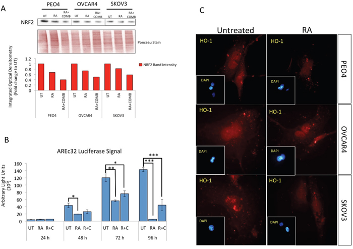 Treatment with Retinoic acid (RA) causes inhibition of NRF2 dependent antioxidant response pathway and generates ROS.