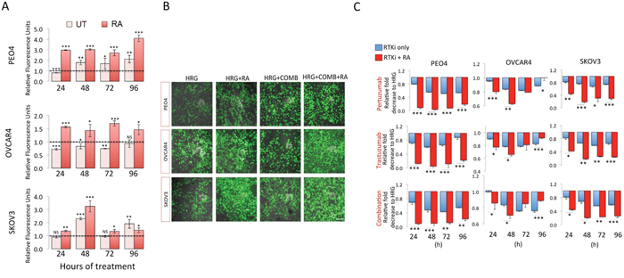 Inhibition of NRF2 pathway by Retinoic acid (RA) sensitizes ovarian cancer cells to immunotherapeutic agents targeting HER2 by increased ROS and enhanced growth inhibition.