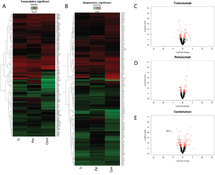 Common and differential expression changes in transcription and epigenetics associated genes in responses to Trastuzumab and Pertuzumab alone or in combination of.
