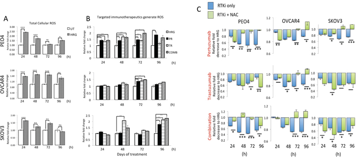 Treatment with HER2 targeting antibodies generates Reactive Oxygen Species (ROS) that when neutralized leads to cytoprotection in ovarian cancer cells.