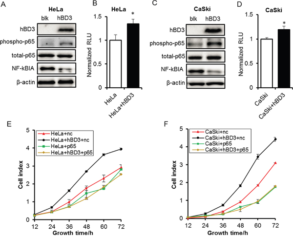 Effects of overexpression of hBD3 on NF-κB signaling.