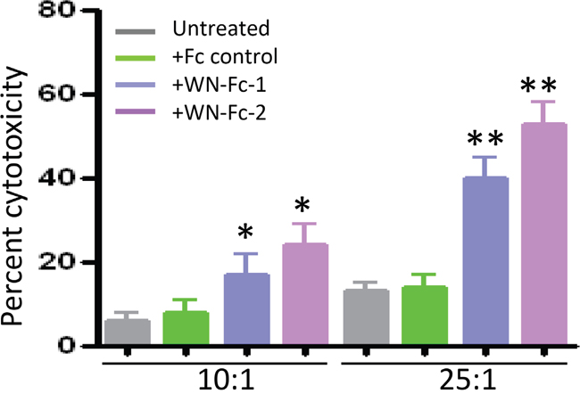 Induction of ADCC by WN-Fc fusion proteins.