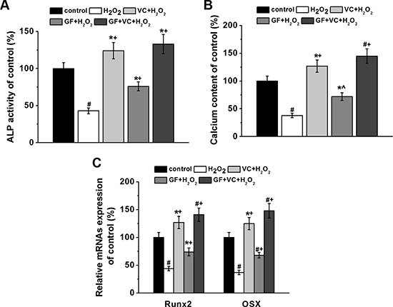 Both GF and VC protected against 0.2 mM H2O2-induced inhibition of osteogenic differentiation of BM-MSCs.