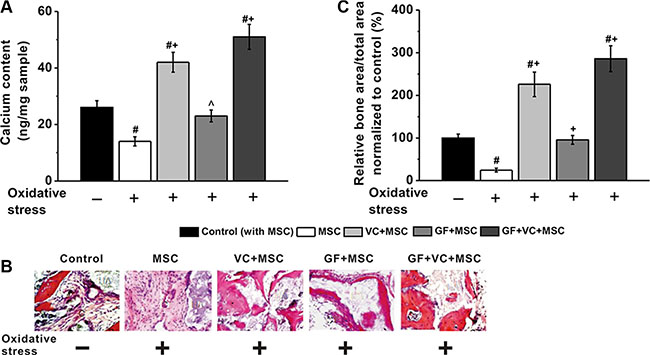 VC and GF facilitated in vivo osteogenesis of MSCs impaired by oxidative stress.