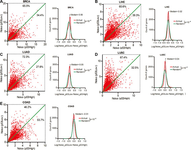 Gene expression noise was inversely correlated to p53 status in cancers.