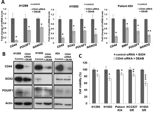 CD44 knockdown and ALDH inhibition reduced pluripotency gene expression and sensitized cells to drug treatment.