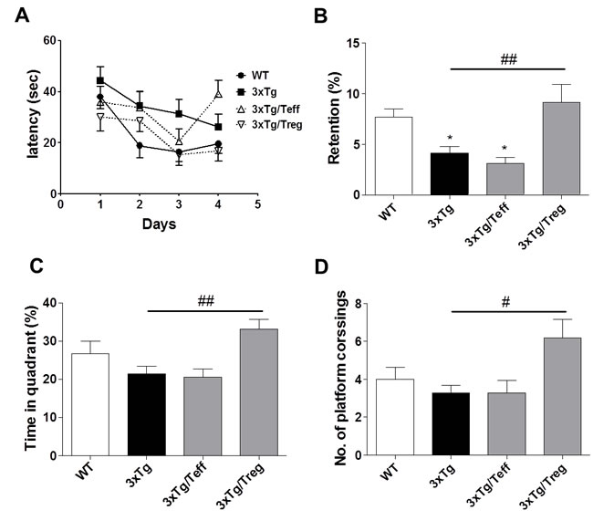 Adoptive transfer of Treg population improves spatial learning memory in 3xTg-AD mice.