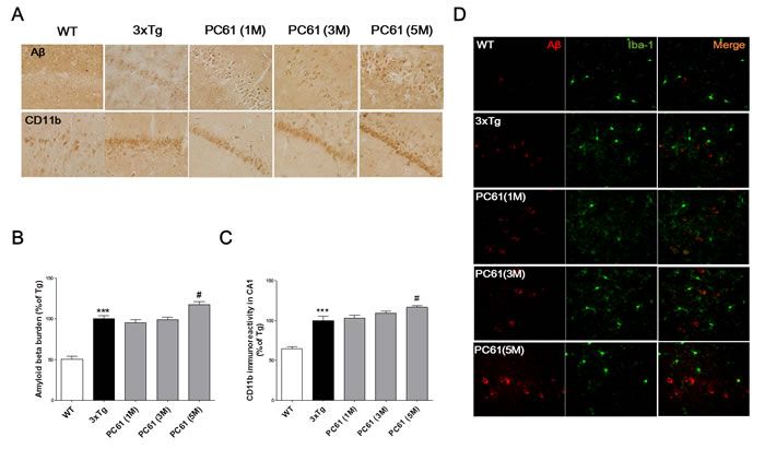 Depletion of Tregs aggravates Aβ pathology and microglial deactivation in the hippocampal region of 3xTg-AD mice.