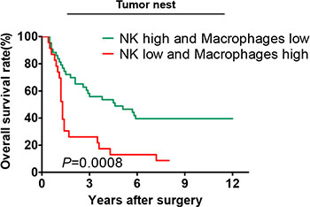 Correlation of the overall survival rate with different combinations of CD57+ NK cells and CD68+ macrophages in the tumor nests.