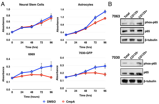 NF-κB is preferentially activated in CD133+ glioblastoma stem cells.