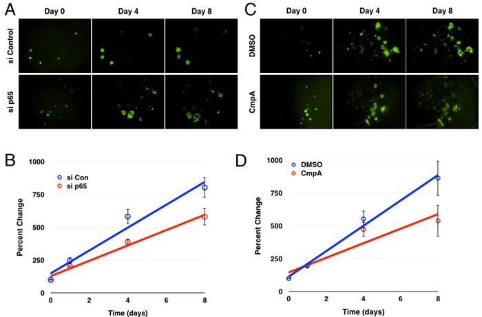 Inhibition of the IKK/NF-κB pathway decreases glioblastoma growth/survival