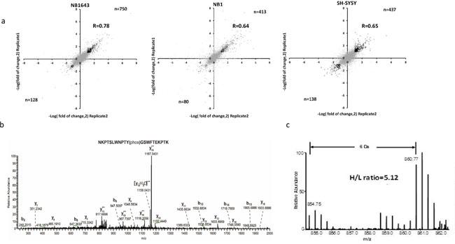 Quantitative analysis of the phosphoproteome upon Crizotinib treatment in ALK positive neuroblastoma.