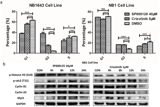 Inhibition of JNK/ALK signaling inactivity reduces cell growth via cell-cycle arrest in neuroblastoma cells.