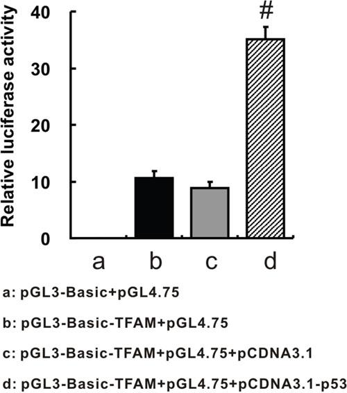TFAM promoter region-driven luciferase expression.