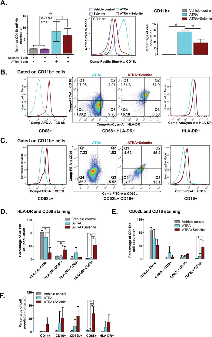 Selenite in combination with ATRA promotes the maturation of NB4 cells.