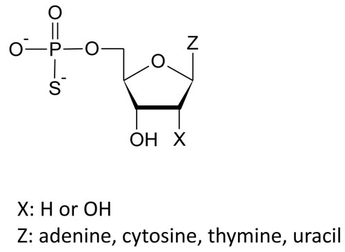 Structures of nucleoside 5'-