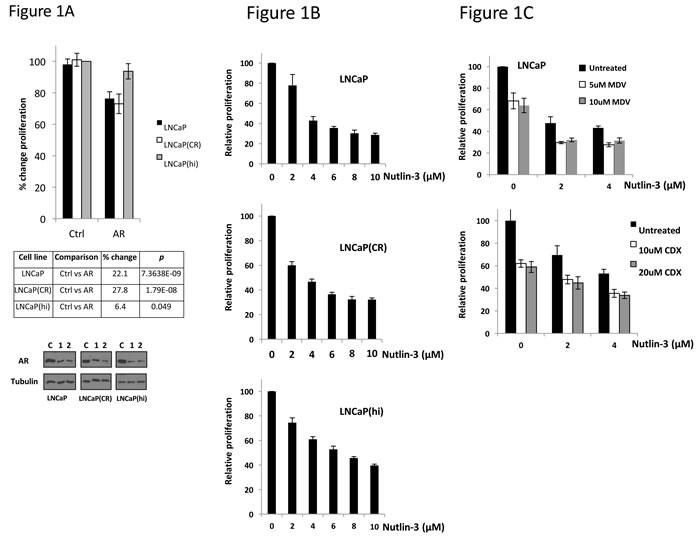 Androgen dependency correlates with sensitivity to Nutlin-3.