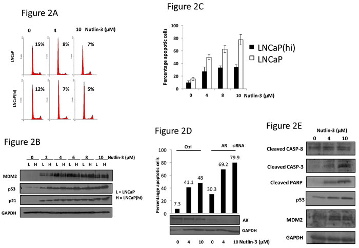 Nutlin-3 enhances apoptosis, but not cell cycle arrest, in a manner dependent upon AR status.
