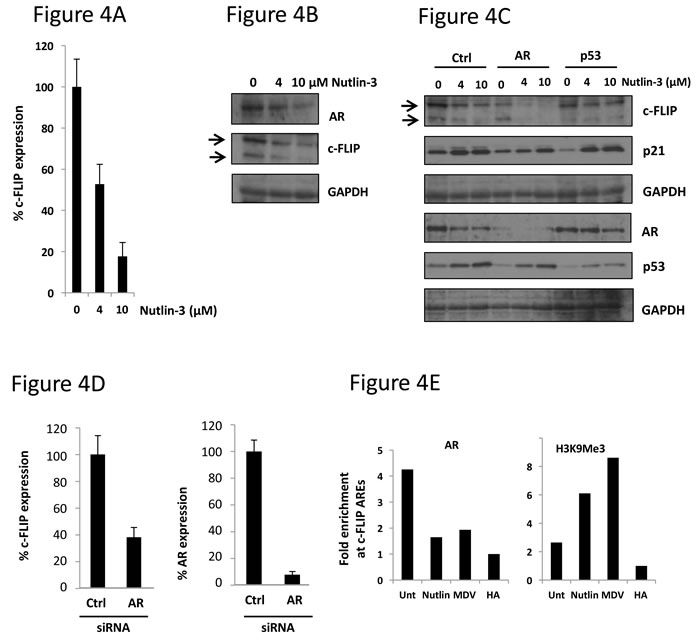 Nutlin-3 treatment results in loss of AR recruitment to the c-FLIP gene and downregulation of c-FLIP expression.
