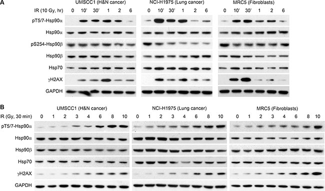 Hsp90α is phosphorylated at threonine 5 and 7 following radiation induced DNA damage.