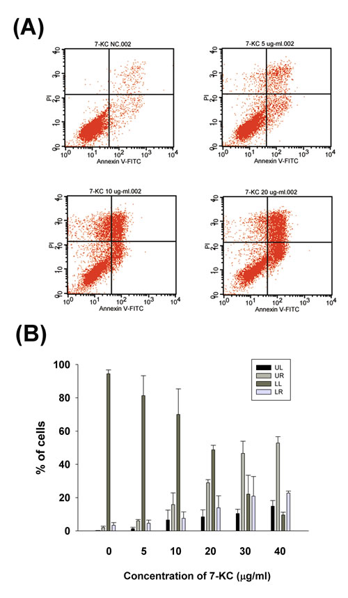 Effect of 7-KC (5-40 µg/ml) on apoptosis of endothelial cells as analyzed by PI and annexin V dual fluorescent flow cytometry.