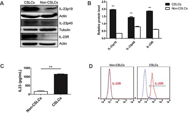 IL-23 and IL-23R expression in ovarian CSLCs.