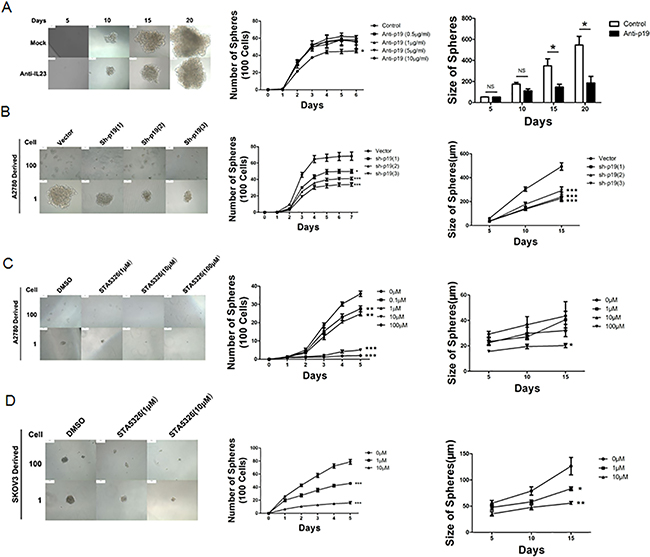 IL-23 is required for self-renewal capacity of CD133+ CSLCs.