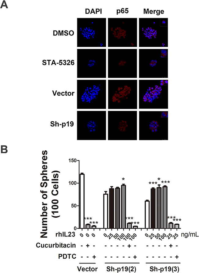 STAT3 and NF-κB signaling pathways are involved in IL-23-promoted self-renewal of CD133+ CSLCs.