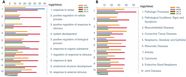 Gene Ontology Processes and Diseases (by biomarkers) associated with erlotinib-resistance in HNSCC cells.