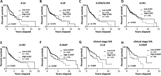 Association of IL-1 pathway gene expression with survival of HNSCC patients.